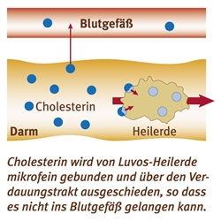 Bindung Cholesterin an Heilerde Natürlich weniger Cholesterin